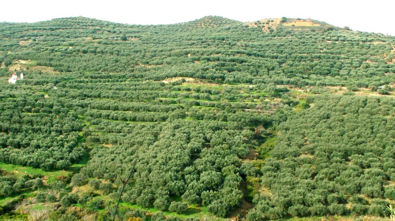 Wp Olives Fertility
